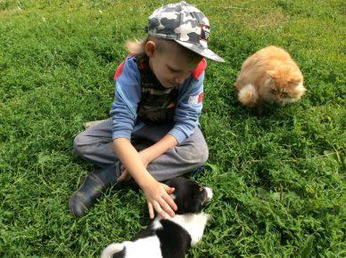 Мальчик играет с питомцами приюта