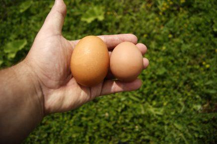 Яйца на ладони