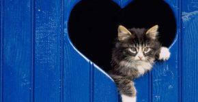 Котёнок в окошке