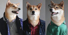 стильная собака