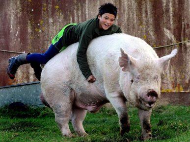 Свинья и мальчик