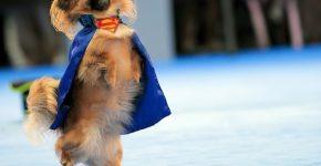 Собачка танцует