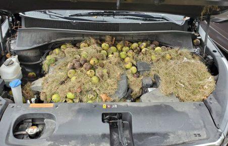 Грецкие орехи под капотом