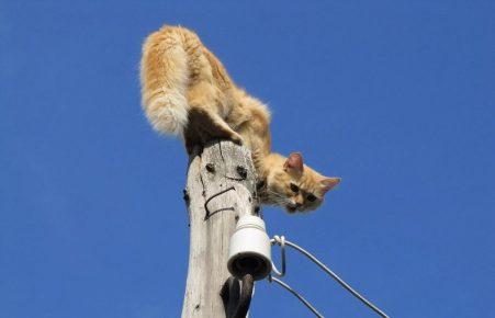 Кот на столбе