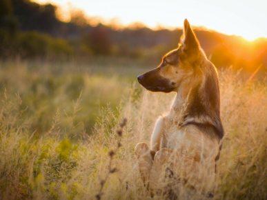 Собака в поле