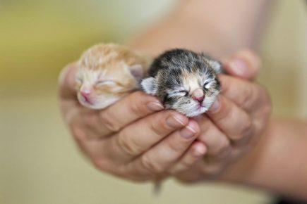 новорожденные котята в руке у человека