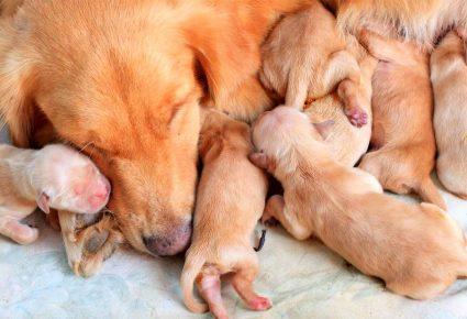 милые новорожденные щенки