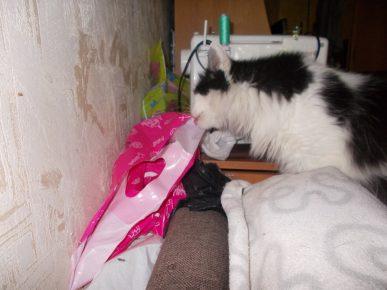 Кот лижет пакет
