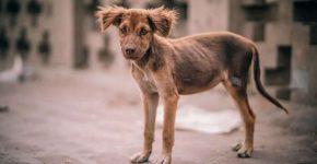 Уличная собака