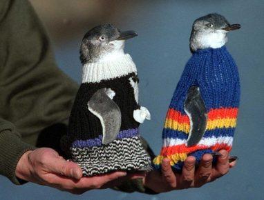 Пингвины в одежде