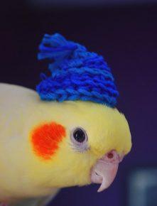 Попугай в шапке
