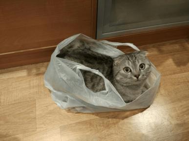 Кот в пакете
