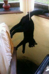 кот запутался в жалюзи