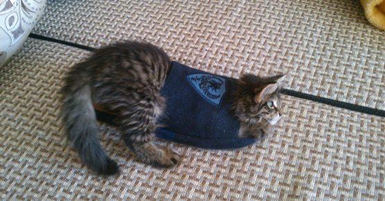 кот застрял в тапке