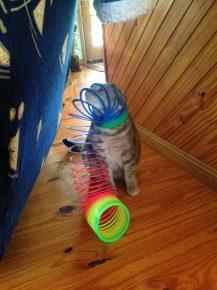 кот застрял в пружинке