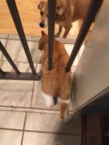 кот застрял в решетке