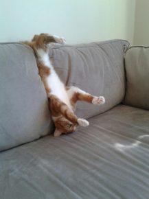 кот застрял в диване