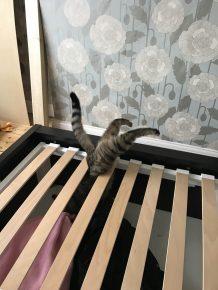 кот застрял в кровати