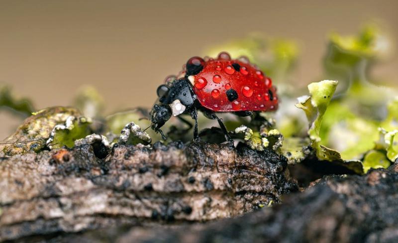 Польза и вред насекомых для детей