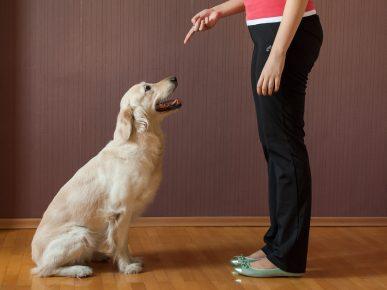 Девушка разговаривает с псом