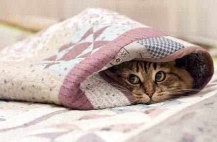 Кошка завернулась в одеяло
