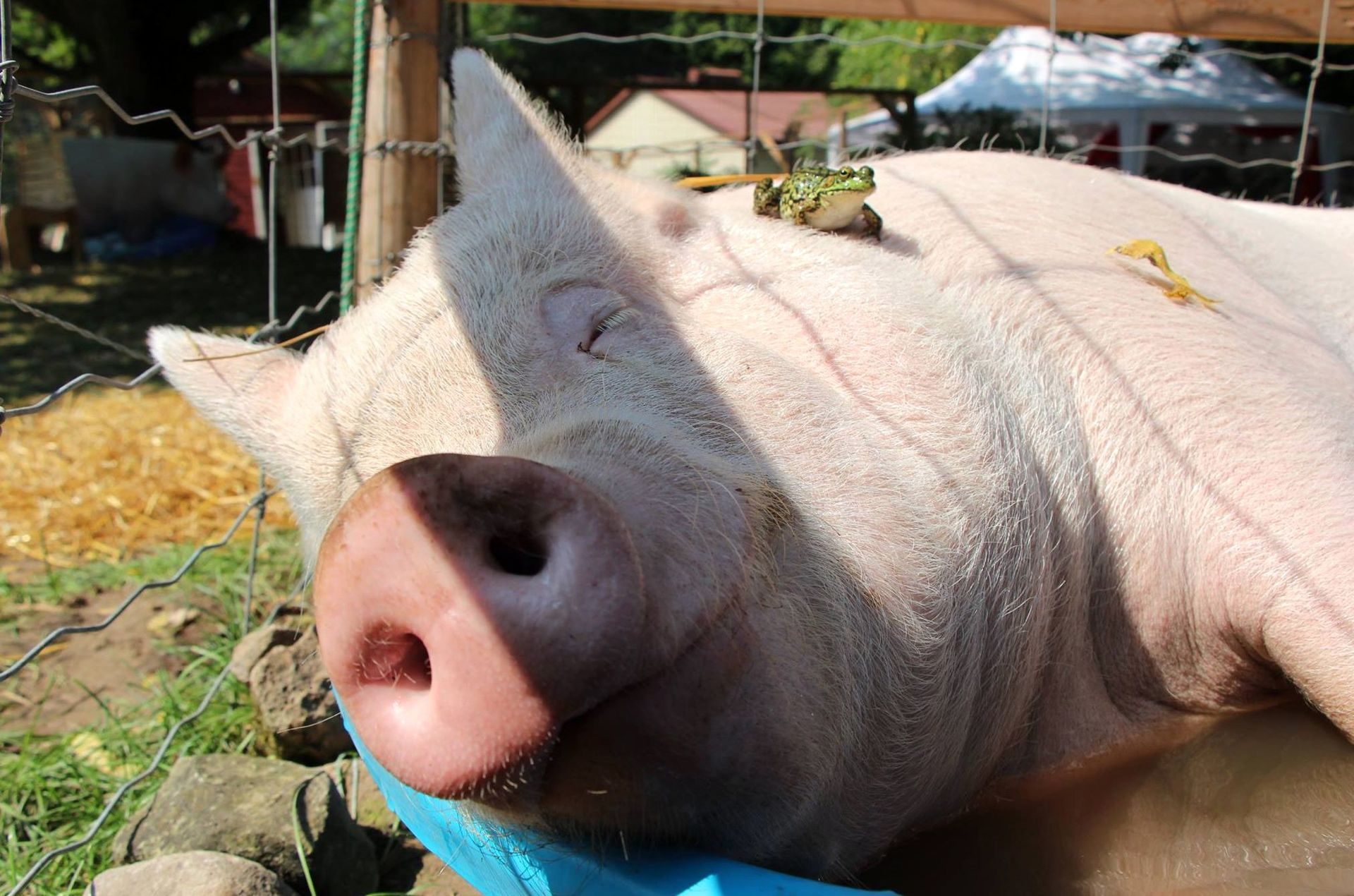 аллеи, картинки с прикольными свиньями убранство дворцов