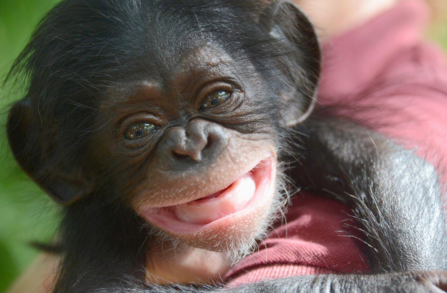 Смешные обезьяны картинки фото рассказываю ученицам