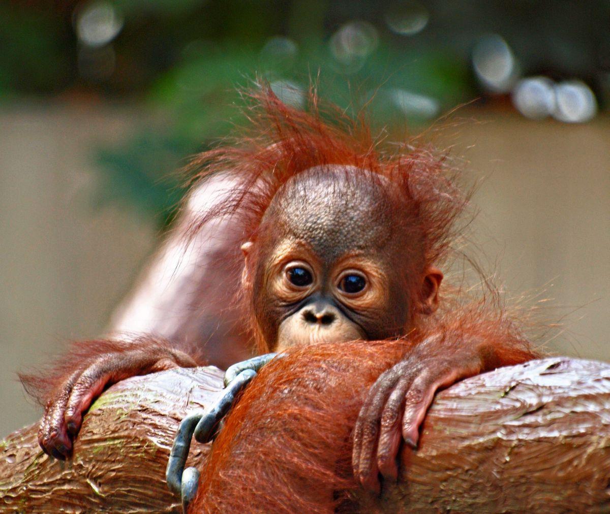 Смешные обезьяны картинки фото тех