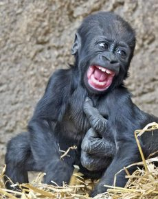 смешные фото обезьян
