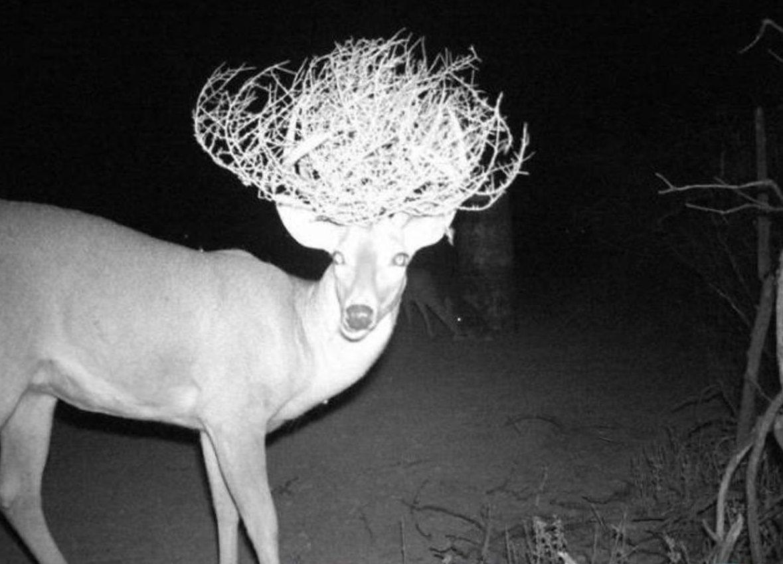 меня странные фото с камер ловушек в лесу подруги держали его