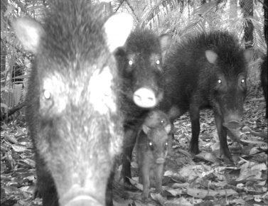 странные фото животных с фотоловушек