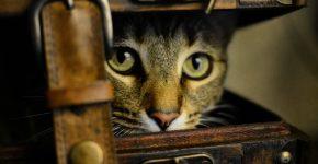 Кот выглядывает из чемодана