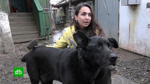 Чёрная собака в приюте