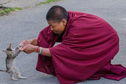 Монах с котом