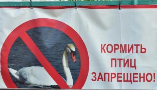Баннер о запрете на кормление птиц