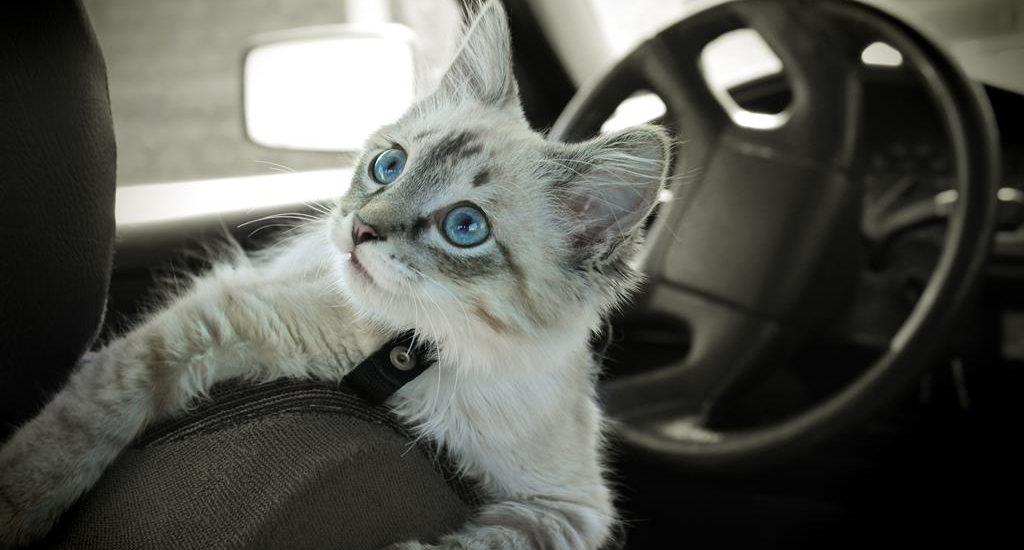 истории открытка кот в машине хороших фотографий или