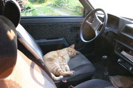 кот спит в машине