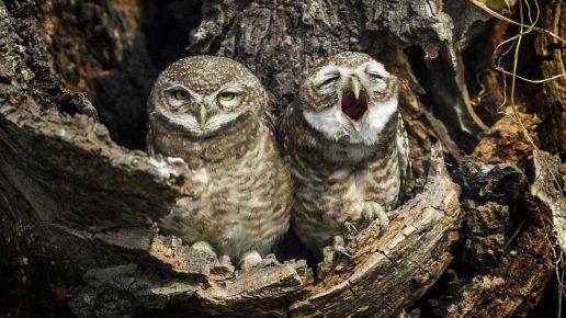 очень смешные фото сов