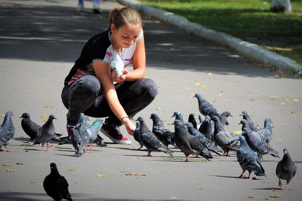 как кормить голубей на улице