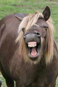 смешная лошадь