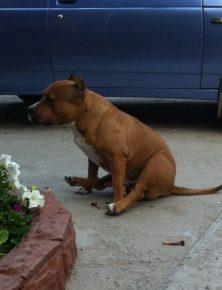 собака сидит на шпагате