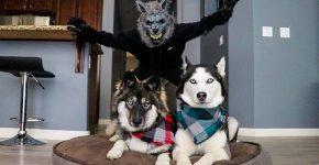 Хозяин пугает собак