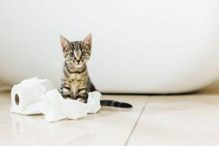 котёнок играет с бумагой