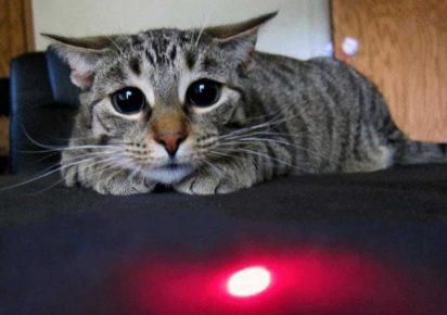 кот смотрит на лазерную указку
