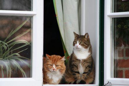 кошки на окне