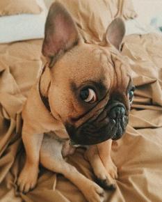 собака варнавы