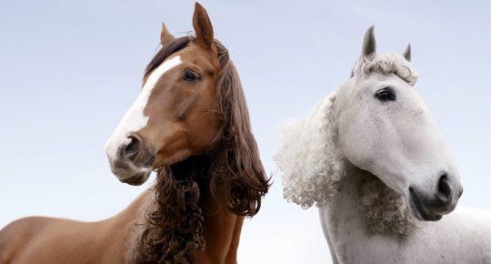 Лошади с причёсками