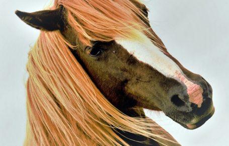 Лошадь с причёской