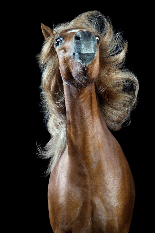 Картинки лошадей смешные