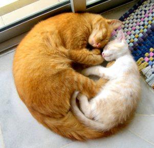 кошки умеют любить